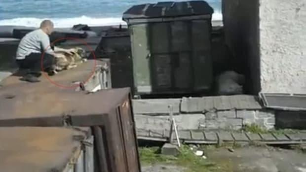 Video Shows Man Throwing Dog To Polar Bear (Video) Promo Image