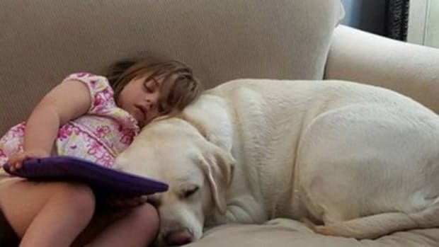 Mother Texts 4-Year-Old Daughter's Teacher After Dog Starts Acting Strangely, Gets Unexpected Reply  Promo Image