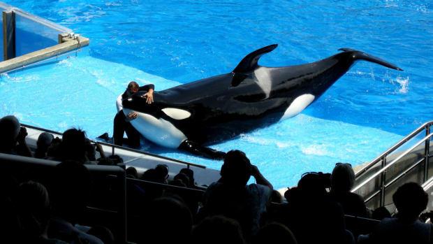 killer whale show