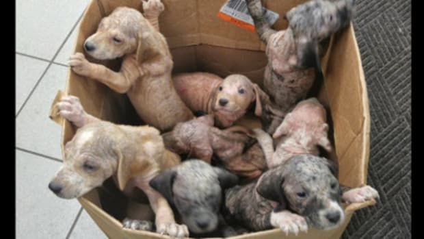 Box of puppies found on Florida roadside