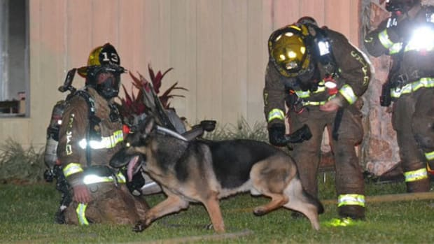 German Shepherd Helps Save Children From Burning Home Promo Image