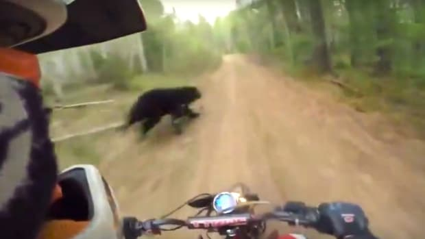 Motorcyclists Barely Avoids Collision With Bear (Video) Promo Image