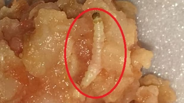 mealworm in cafeteria food