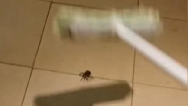 Man Kills Spider, Gets Horrifying Surprise (Video) Promo Image