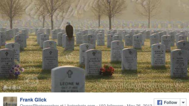 Eagle At Cemetery.
