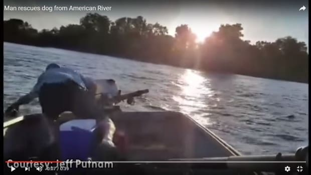 Fisherman Rescues Dog From California River (Video) Promo Image