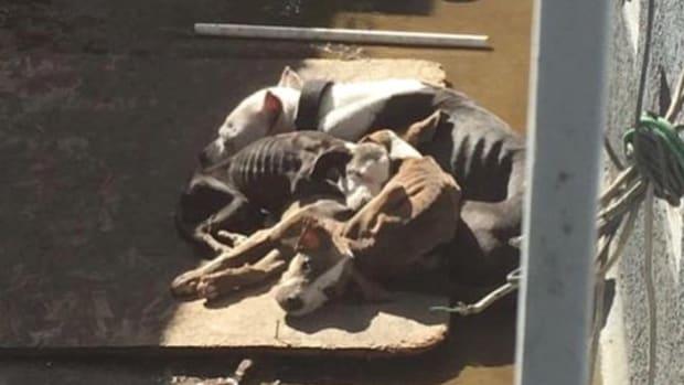 Emaciated Dogs, Pico Rivera