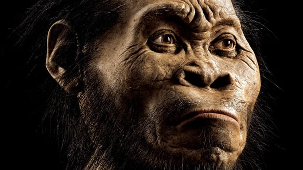 An artistic representation of Homo naledi, reconstructed from bone scans