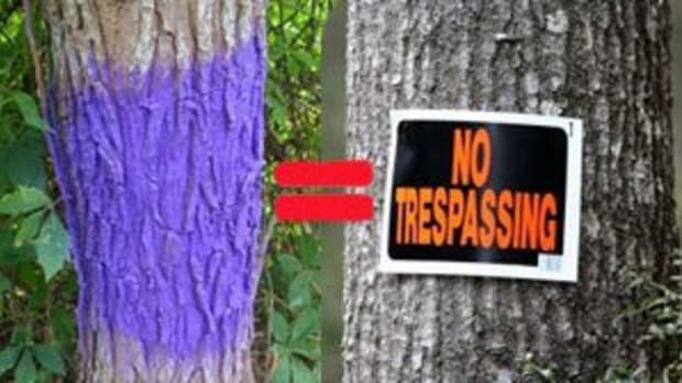 purple paint on tree