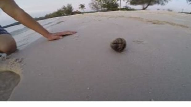 Two Men Pry Open Shell They Found On Beach, Get Huge Surprise (Photos) Promo Image