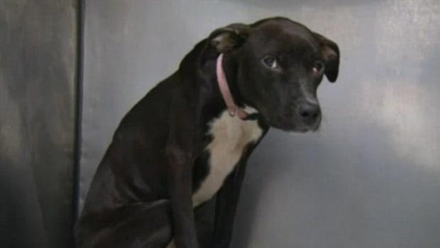 The abandoned dog left in Prospect Park