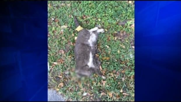 Miami: 5 Decapitated Cats Found In 10 Days Promo Image