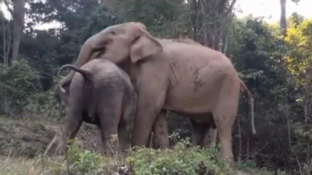elephantreunion1_featured.jpg