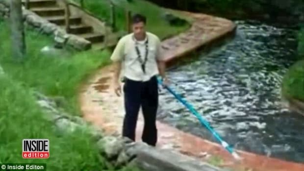 Disney World Employee Fends Off Alligator (Video) Promo Image