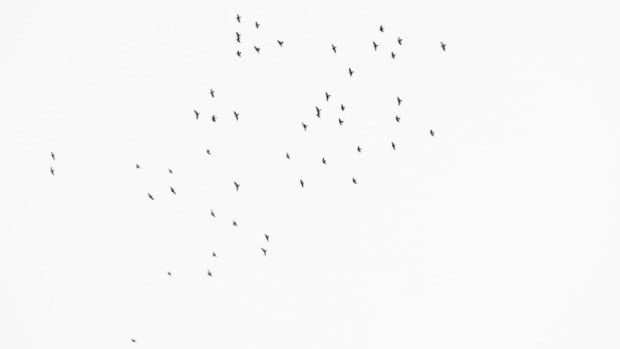 49 Birds Fly Over Vigil For Orlando Shooting Victims Promo Image
