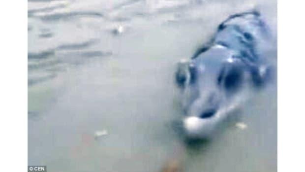 Bizarre Sea Creature Stumps Chinese Fishermen (Video) Promo Image