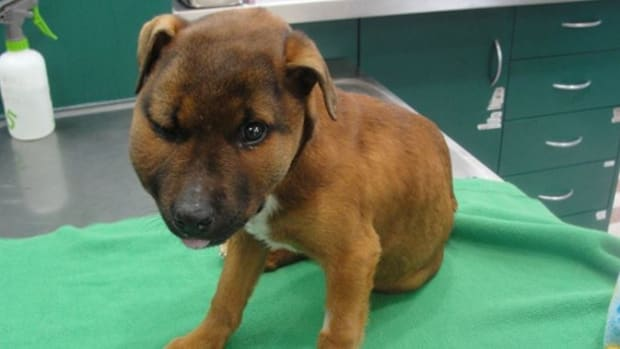 Man Sentenced To Prison For Attacking Puppy (Photos) Promo Image