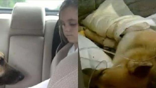 Dog Sees Who Is About To Attack 7-Year-Old Owner, Steps In And Makes Ultimate Sacrifice  Promo Image