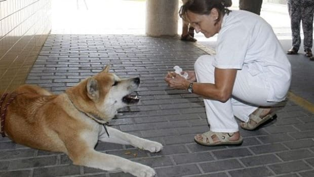 Loyal Dog Refuses To Leave Owner At Hospital Promo Image