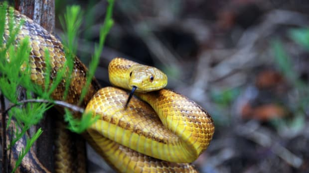 Mom Facing Charges For Letting Snake Bite Her Daughter Promo Image