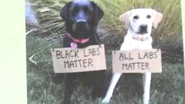 San Francisco Police Union: 'Black Labs Matter' (Video) Promo Image