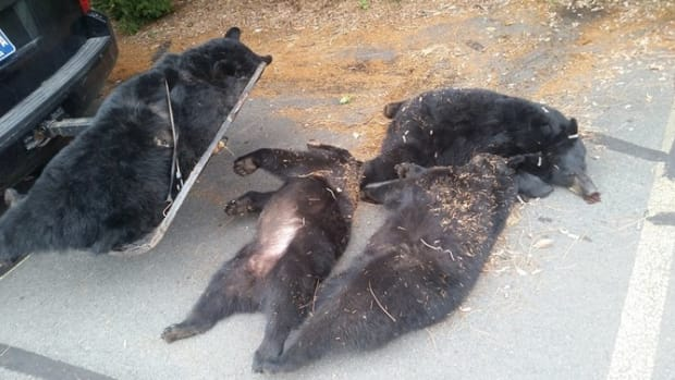 Authorities Finally Discover What Happened To 4 Dead Bears Outside Church Promo Image
