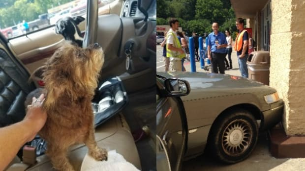 Woman Leaves Dogs In Car, They Crash It Into Wal-Mart Promo Image