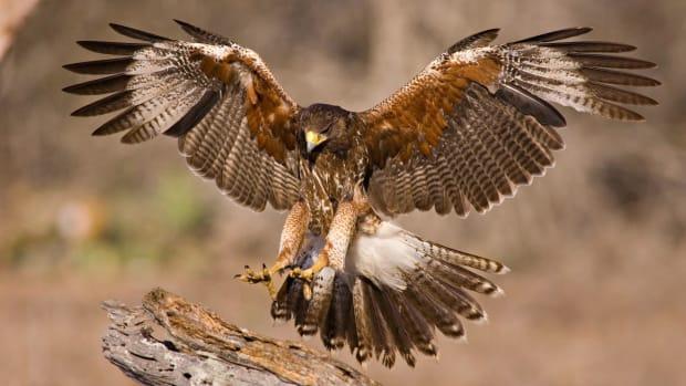 Photo Of Dozens Of Hawks On Plane Goes Viral (Photo) Promo Image