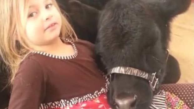Daughter Explains Why She Had To Let A Cow Inside (Video) Promo Image