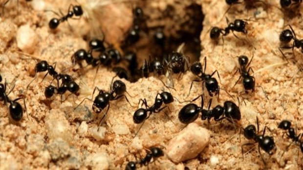 Some Simple Tips To Keep Ants Away (Video) Promo Image