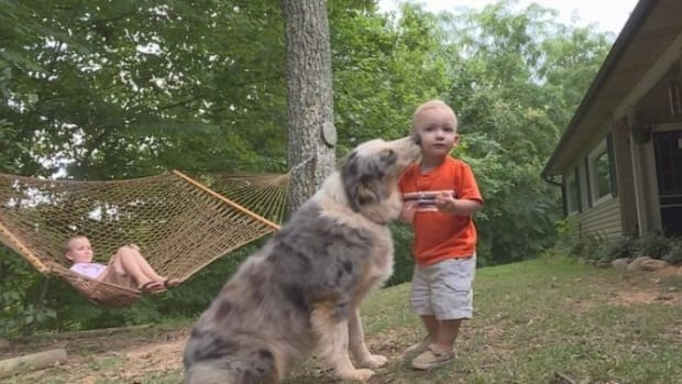 Family Dog Randomly Lunges At Baby -- Parents Floored After They Realize Why Promo Image