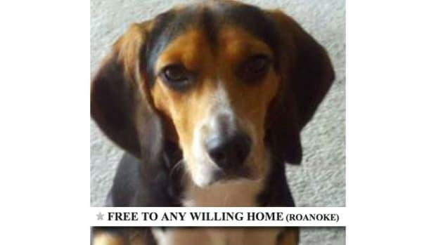 Girlfriend Hates Dog, Man Makes Hilarious Craigslist Ad Promo Image