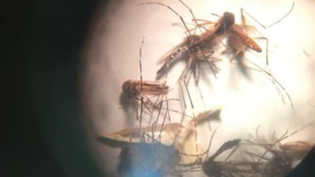WHO: Zika Is No Longer A Global Emergency Promo Image