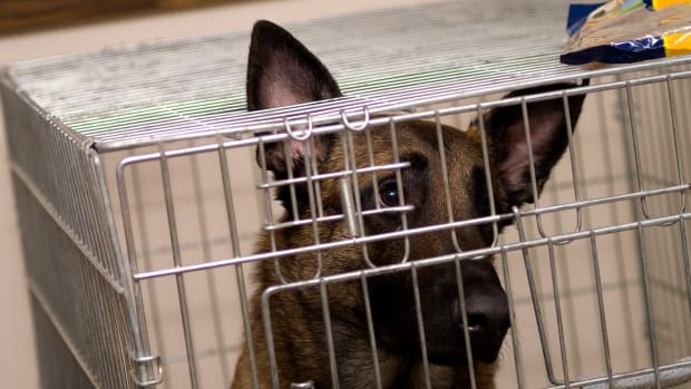Dog Meat Set To Be Banned At Yulin Festival Promo Image