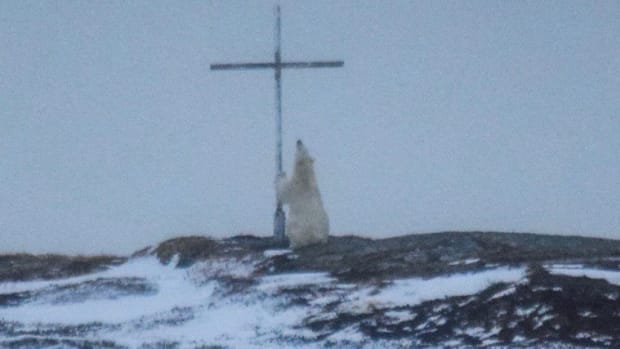 Photographer: Polar Bear Was 'Praying' At Cross Promo Image