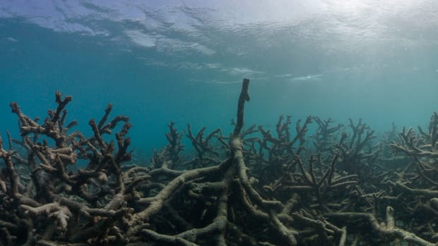 Researchers: Great Barrier Reef Dying At Alarming Rate (Photos) Promo Image