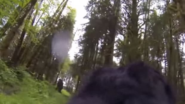 Did This Dog Just Find Bigfoot? (Video) Promo Image