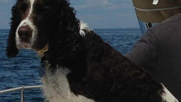 Lobsterman Rescues Dog Lost At Sea, Reunites With Master Promo Image