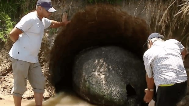 Man Finds Huge 'Dinosaur Egg,' But It's Something More (Photos) Promo Image