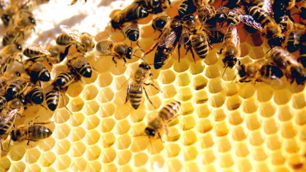Man Dies After Getting Stung Hundreds Of Times By Bees Promo Image