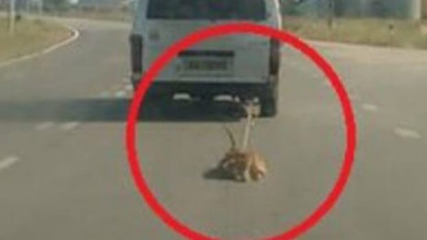 Man Drags Dog Behind Car, Authorities Do Nothing Promo Image
