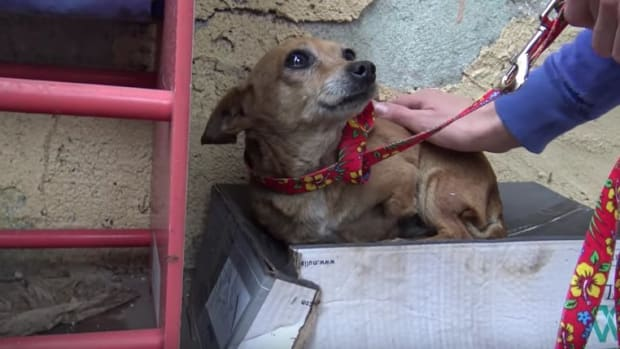 Dog Living In Shoebox In Front Of Home Up For Adoption Promo Image