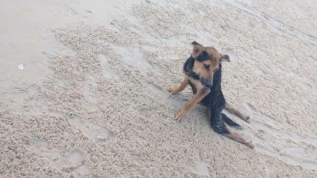 Model Saves Paralyzed Dog In Thailand (Photos) Promo Image