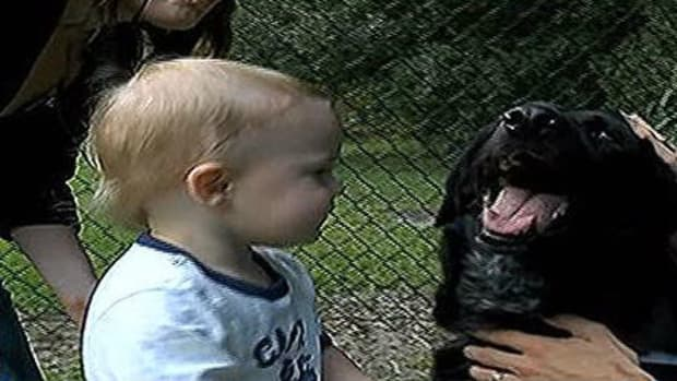 Dog Protects Child From Abusive Baby-Sitter (Video) Promo Image