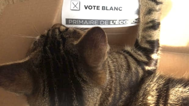 Cat Registers, Votes In French Primary Election Promo Image