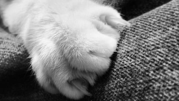 New Jersey Bill Would Ban Declawing Cats Promo Image