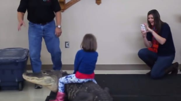 Girl Rides Alligator As Mom Films (Video) Promo Image
