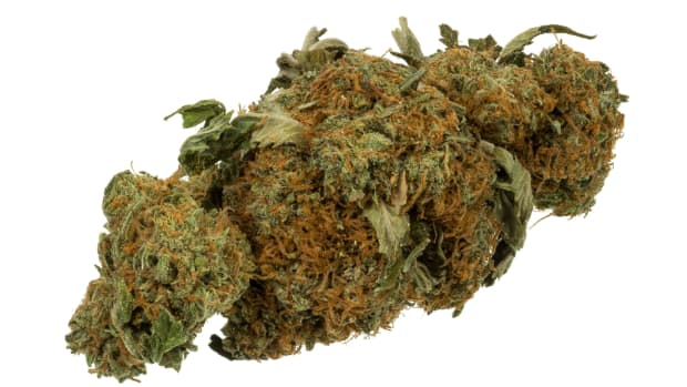 DEA Mulls Easing Marijuana Restrictions Promo Image
