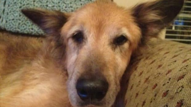 Family Takes In Neglected Elderly Dog (Photos) Promo Image