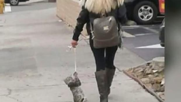 Witness: Woman Dragged Cat On Leash, Tased Bystander (Video) Promo Image